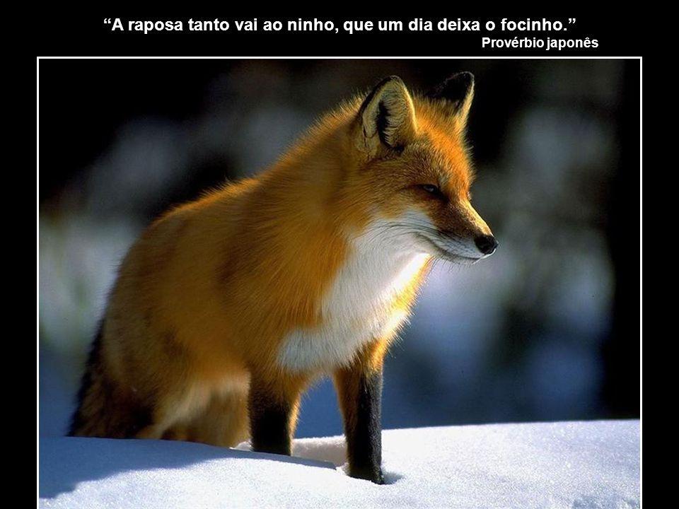 A raposa tanto vai ao ninho, que um dia deixa o focinho.