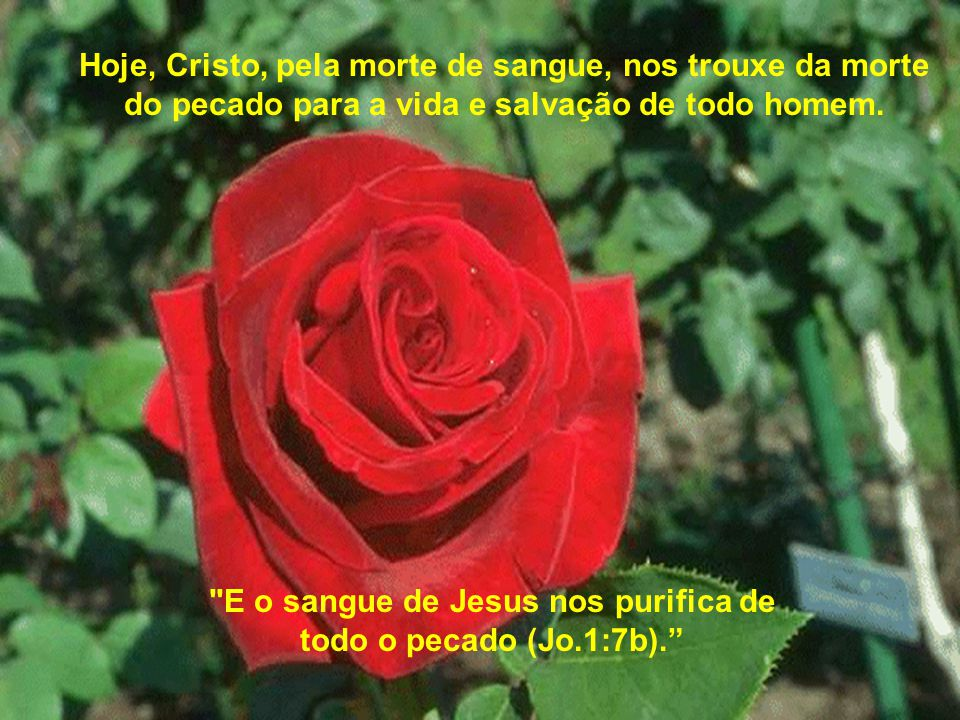 E o sangue de Jesus nos purifica de todo o pecado (Jo.1:7b).