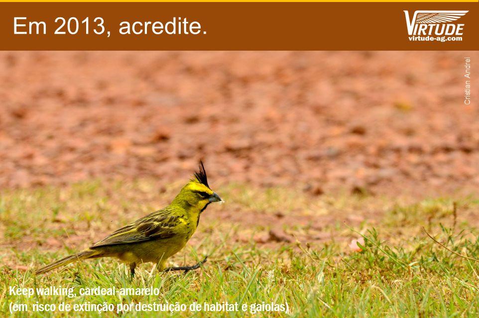 Em 2013, acredite. Keep walking, cardeal-amarelo