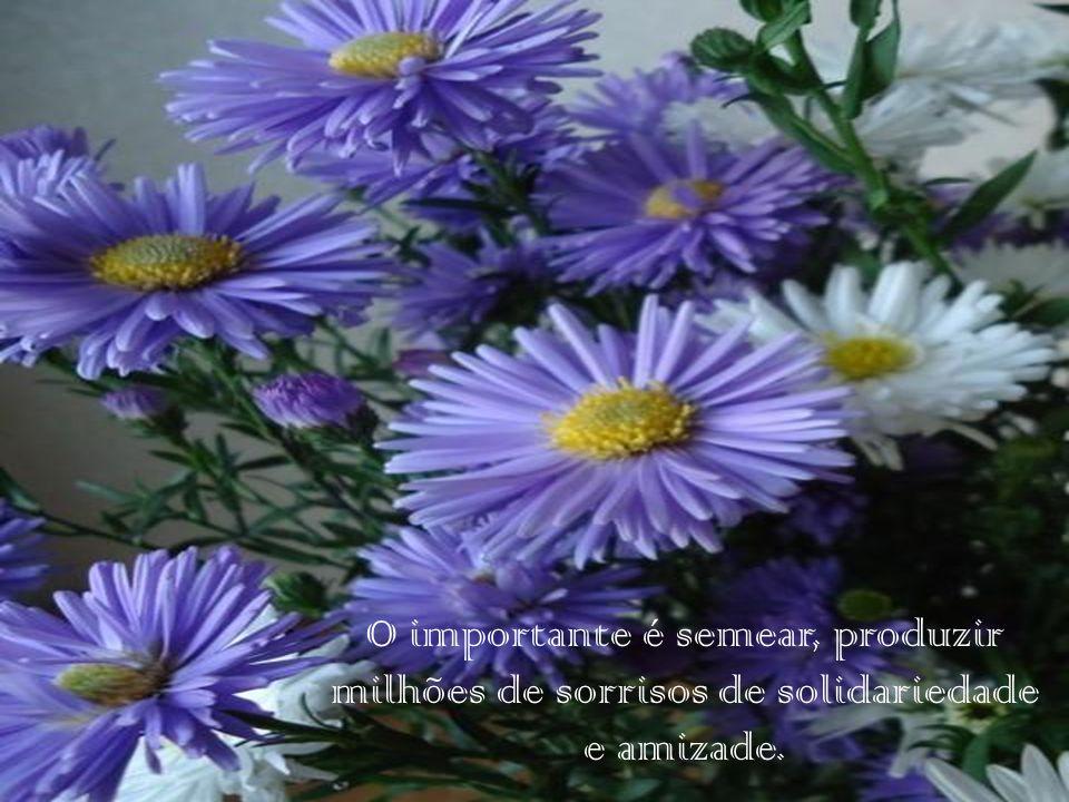 O importante é semear, produzir milhões de sorrisos de solidariedade e amizade.