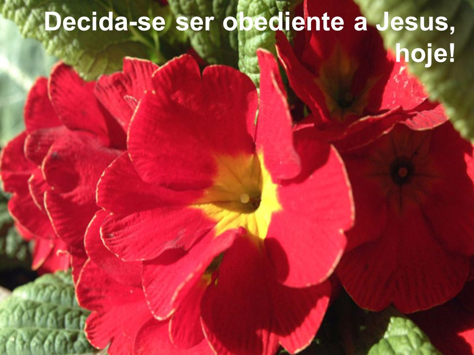Decida-se ser obediente a Jesus, hoje!