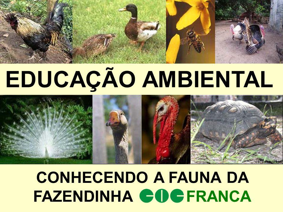 CONHECENDO A FAUNA DA FAZENDINHA FRANCA