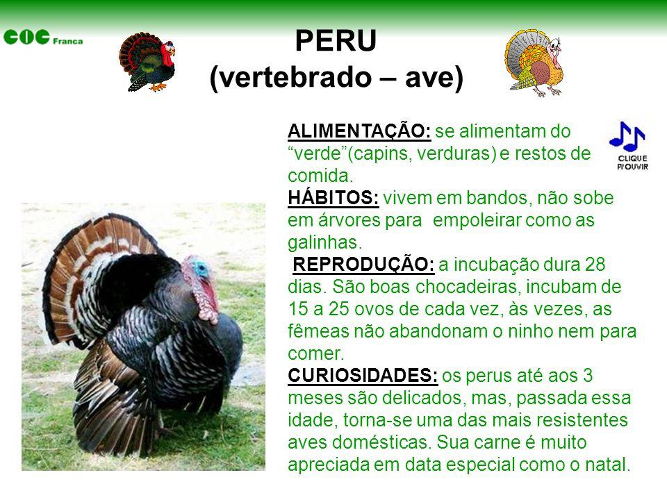PERU (vertebrado – ave)