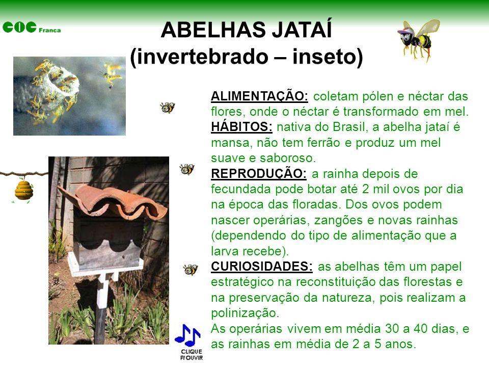 ABELHAS JATAÍ (invertebrado – inseto)