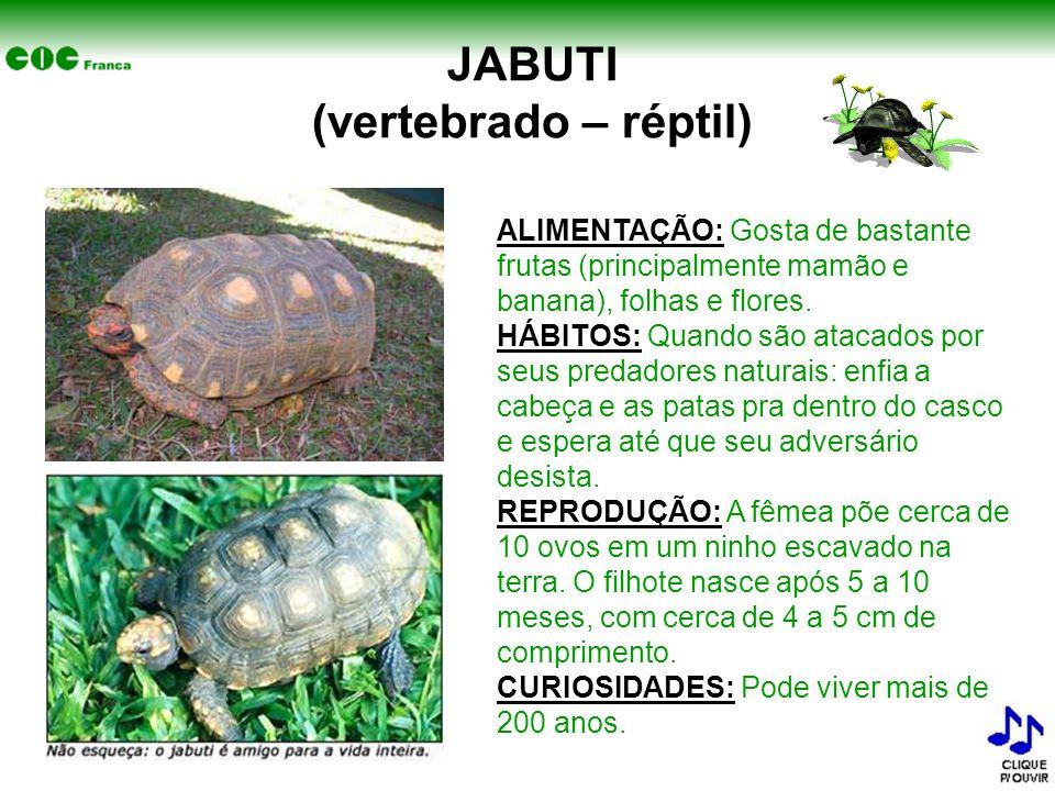 JABUTI (vertebrado – réptil)
