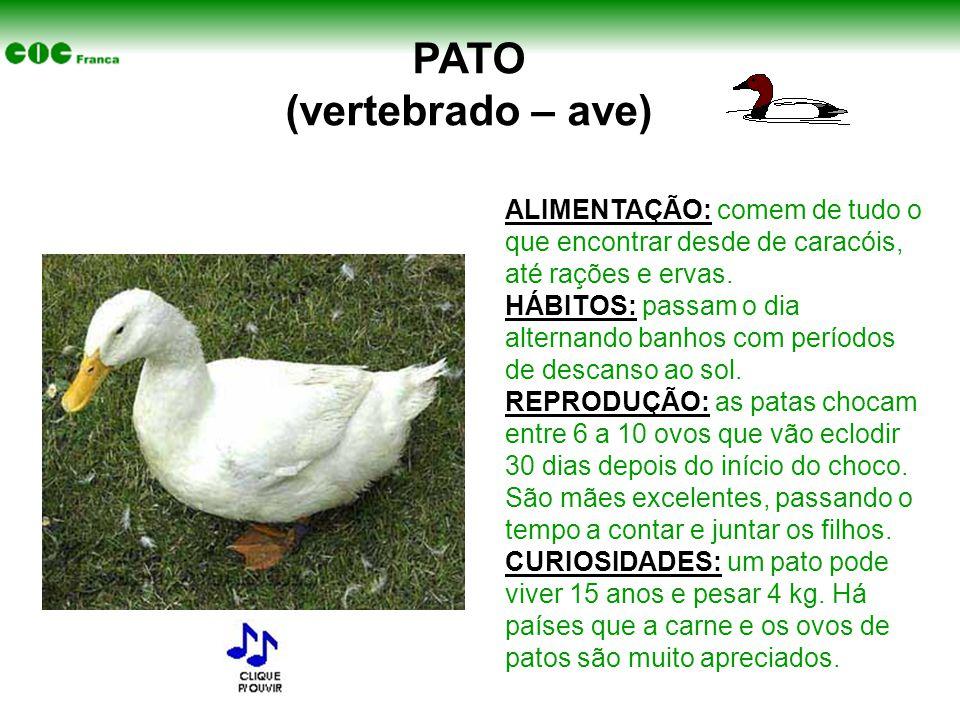 PATO (vertebrado – ave)