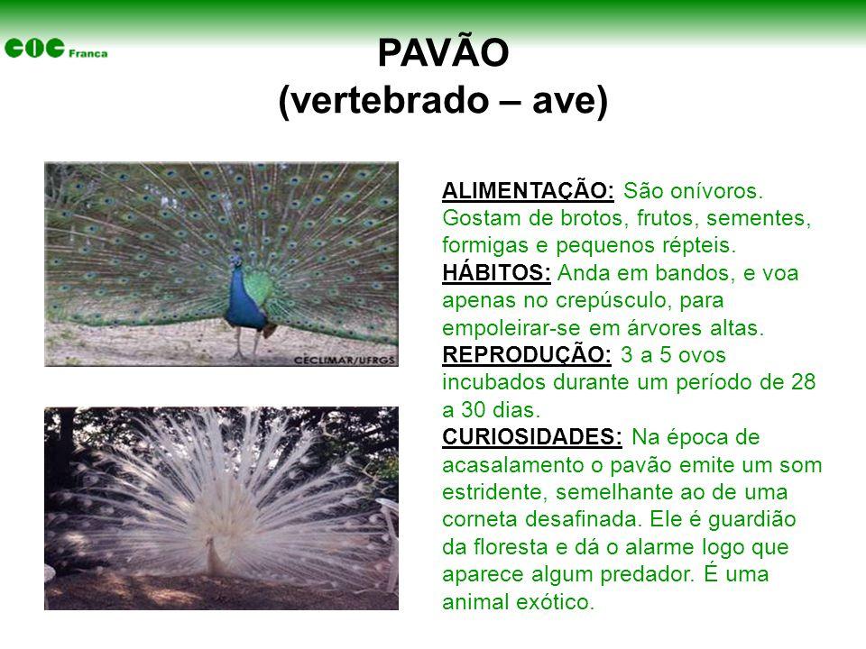 PAVÃO (vertebrado – ave)