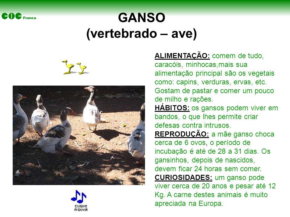 GANSO (vertebrado – ave)