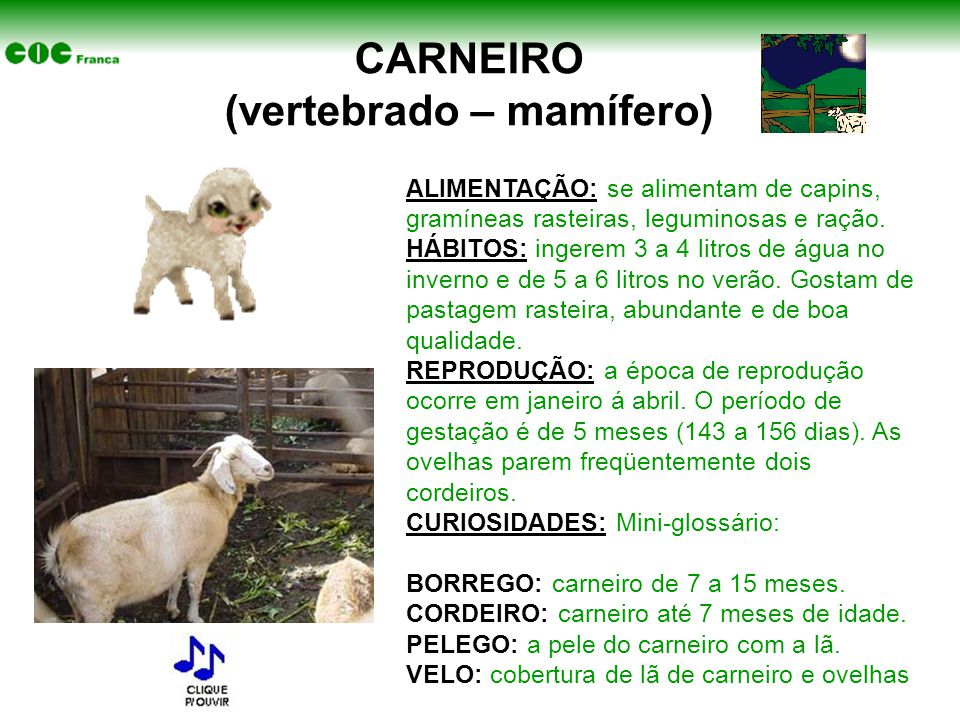 CARNEIRO (vertebrado – mamífero)