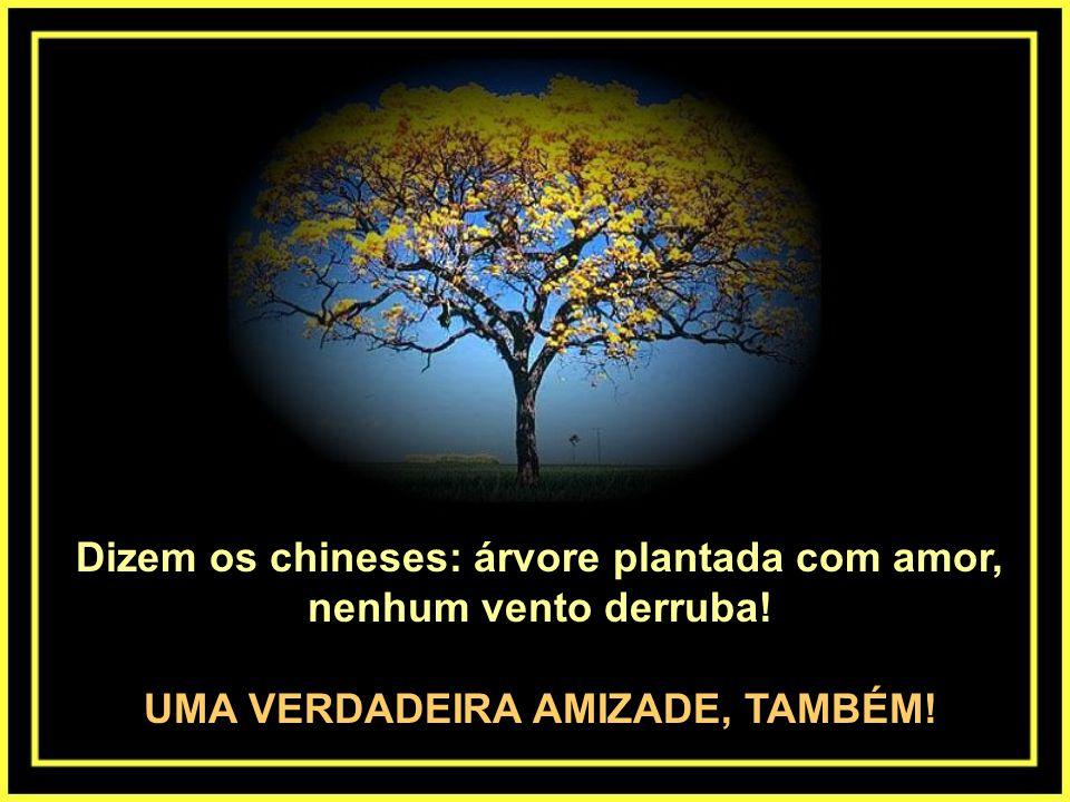 Dizem os chineses: árvore plantada com amor, nenhum vento derruba!