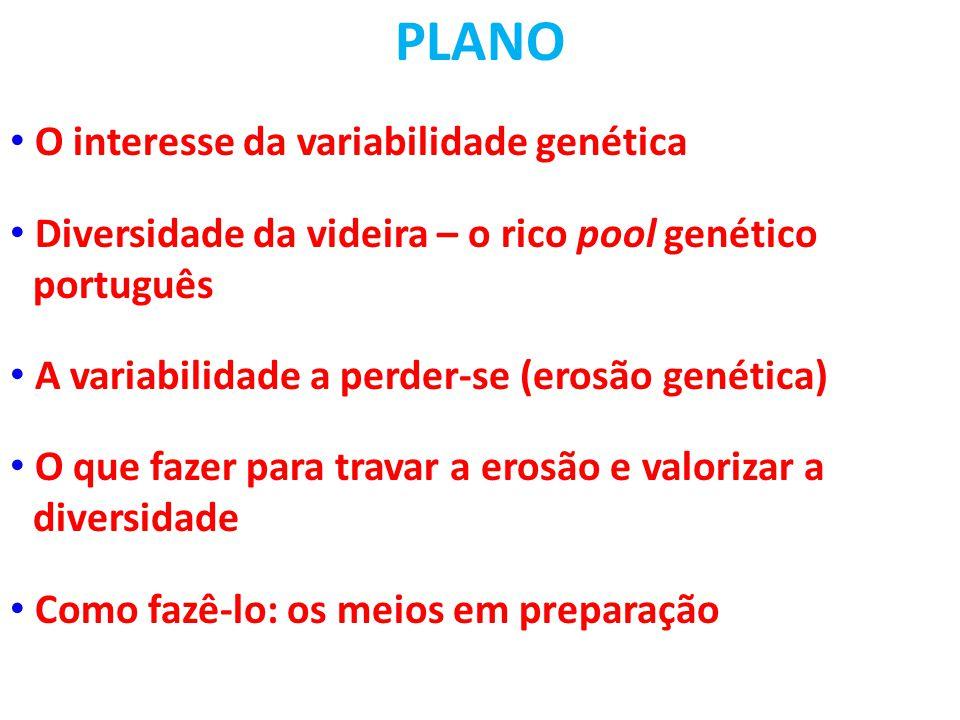 PLANO O interesse da variabilidade genética