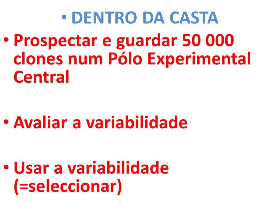 DENTRO DA CASTA Prospectar e guardar 50 000 clones num Pólo Experimental Central. Avaliar a variabilidade.