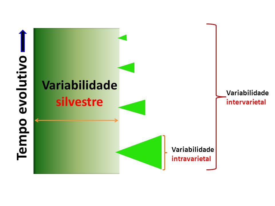 Variabilidade silvestre