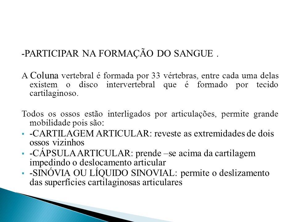 -PARTICIPAR NA FORMAÇÃO DO SANGUE .