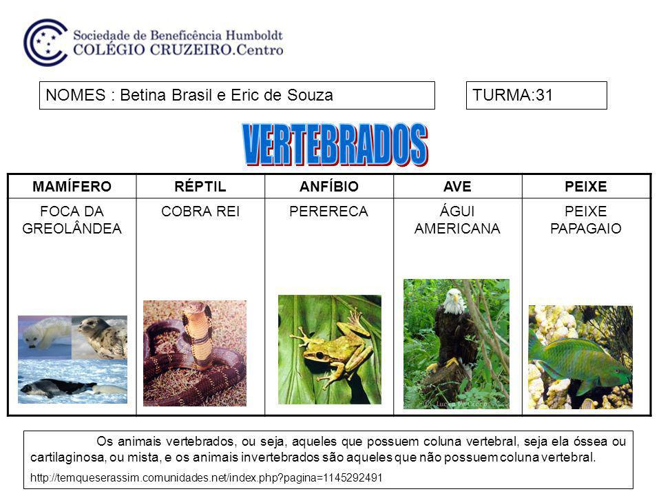 VERTEBRADOS NOMES : Betina Brasil e Eric de Souza TURMA:31 MAMÍFERO