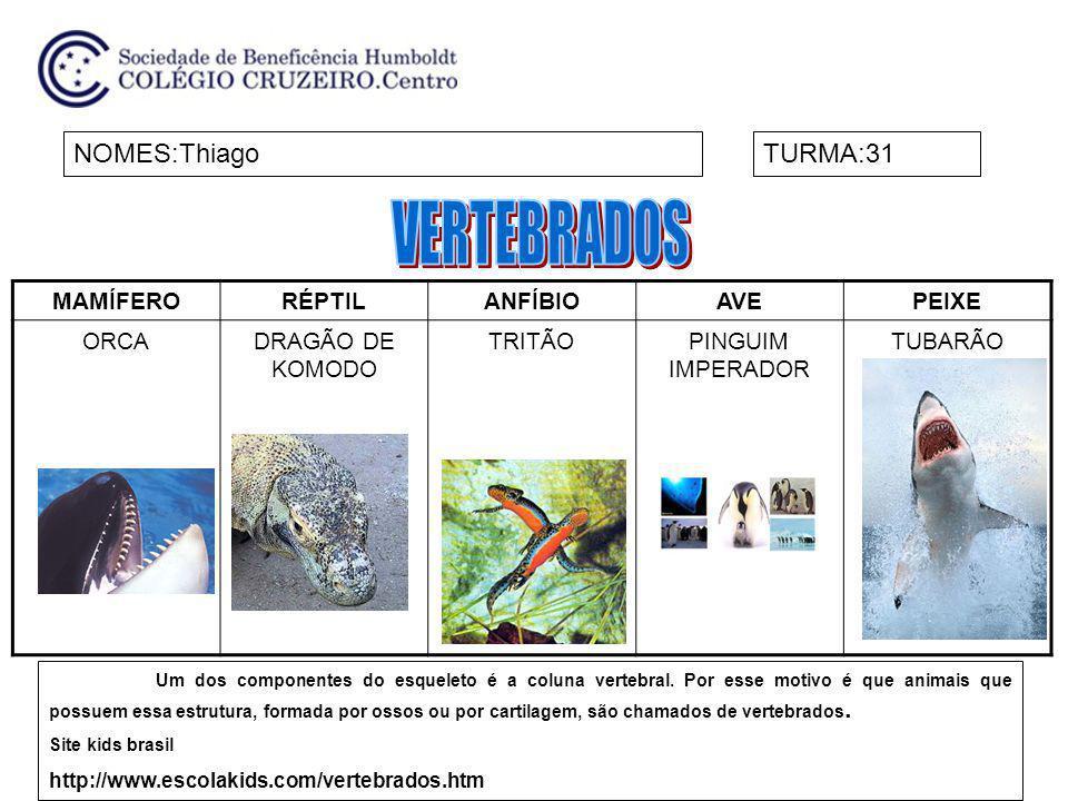 VERTEBRADOS NOMES:Thiago TURMA:31 MAMÍFERO RÉPTIL ANFÍBIO AVE PEIXE