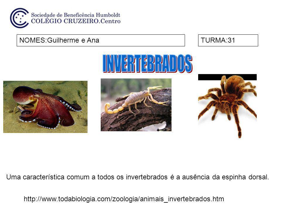 INVERTEBRADOS NOMES:Guilherme e Ana TURMA:31