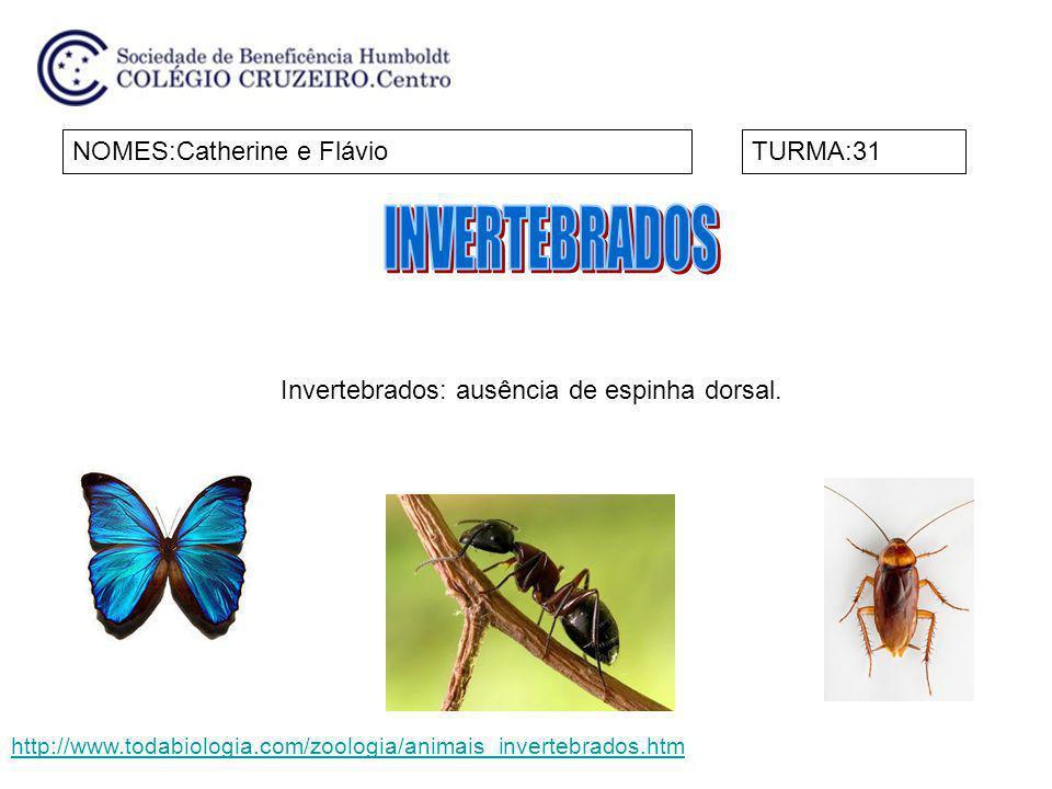 INVERTEBRADOS NOMES:Catherine e Flávio TURMA:31