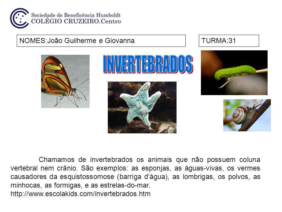 INVERTEBRADOS NOMES:João Guilherme e Giovanna TURMA:31