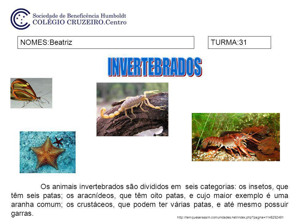 INVERTEBRADOS NOMES:Beatriz TURMA:31
