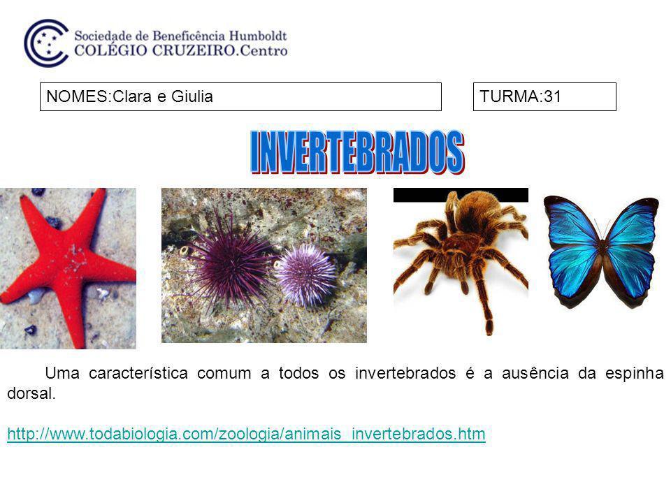 INVERTEBRADOS NOMES:Clara e Giulia TURMA:31