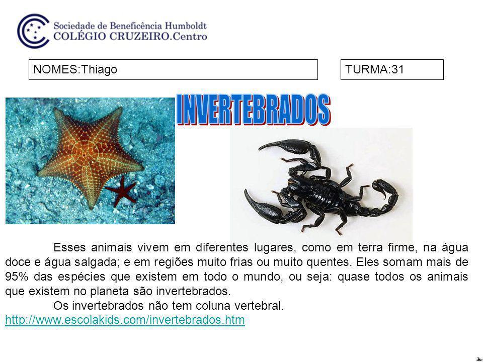 INVERTEBRADOS NOMES:Thiago TURMA:31