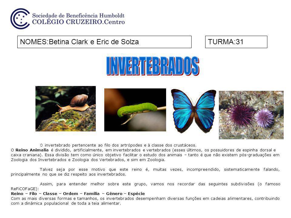INVERTEBRADOS NOMES:Betina Clark e Eric de Solza TURMA:31