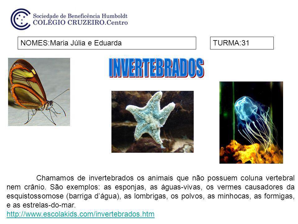 INVERTEBRADOS NOMES:Maria Júlia e Eduarda TURMA:31