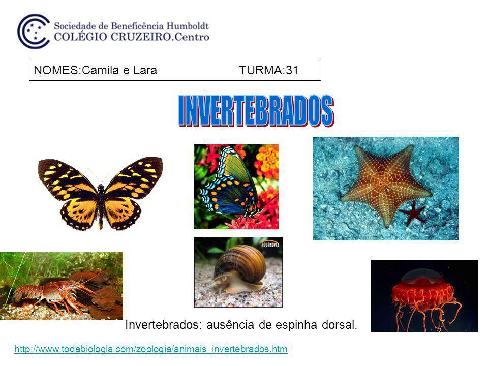 INVERTEBRADOS NOMES:Camila e Lara TURMA:31