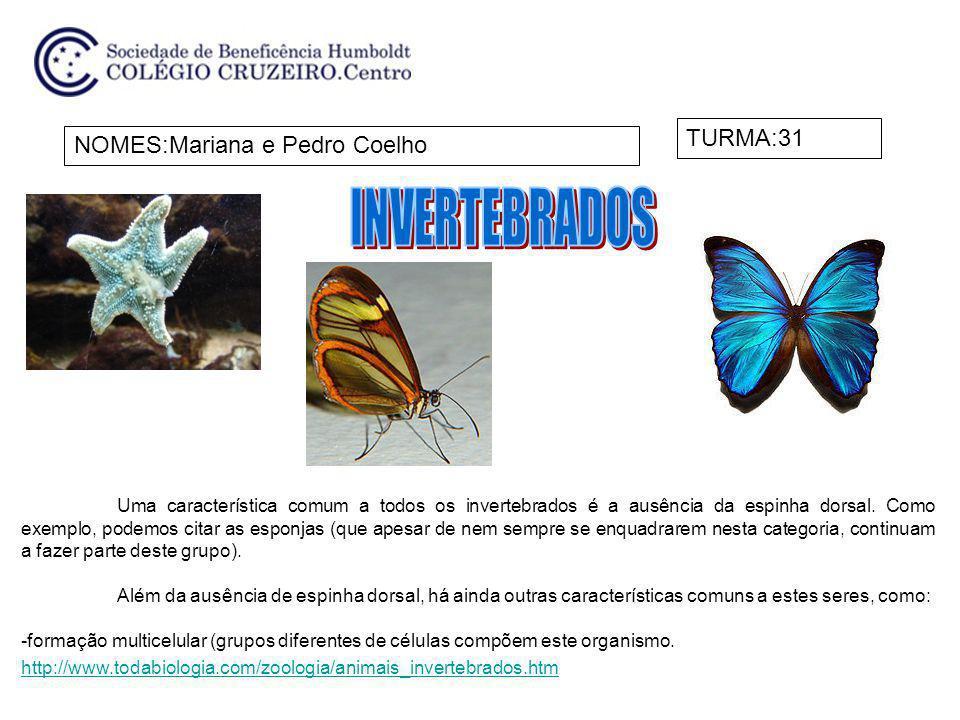 INVERTEBRADOS TURMA:31 NOMES:Mariana e Pedro Coelho
