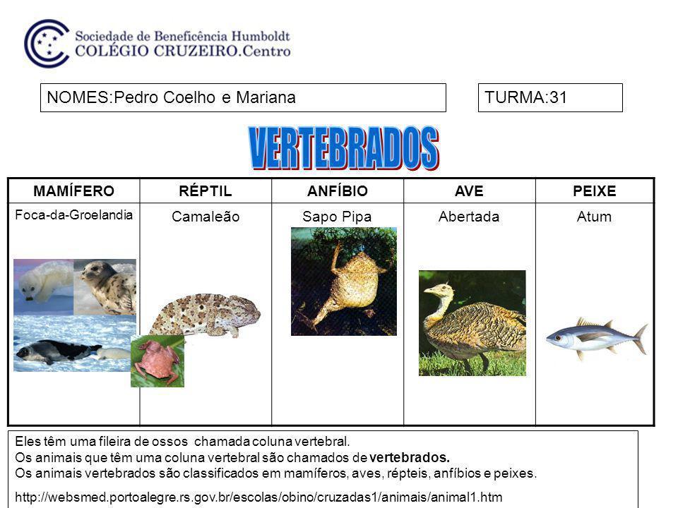 VERTEBRADOS NOMES:Pedro Coelho e Mariana TURMA:31 MAMÍFERO RÉPTIL