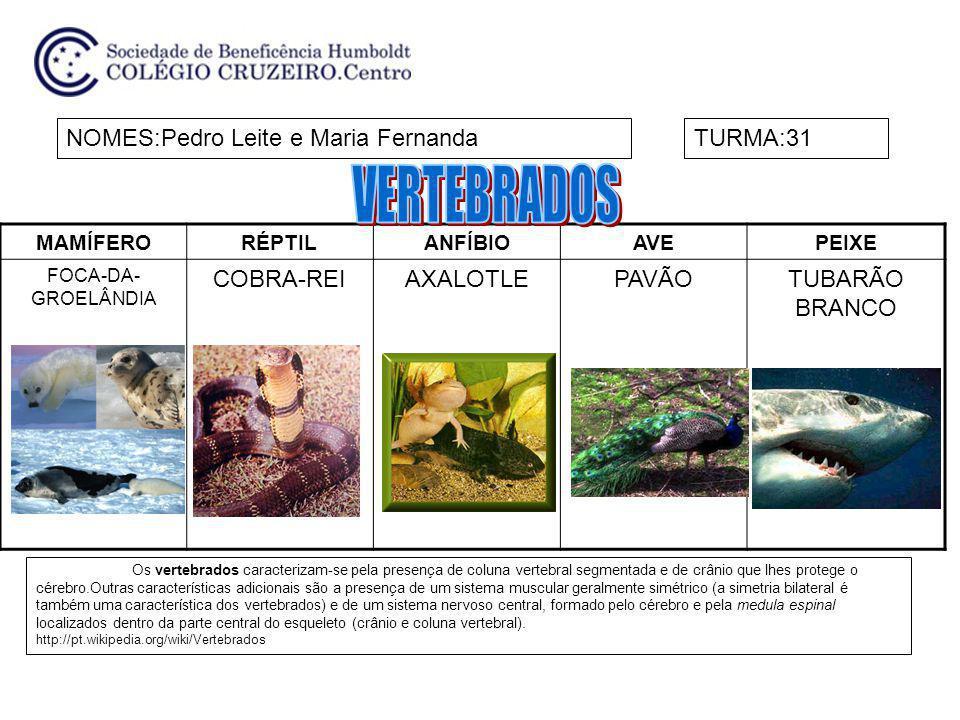 VERTEBRADOS NOMES:Pedro Leite e Maria Fernanda TURMA:31 COBRA-REI