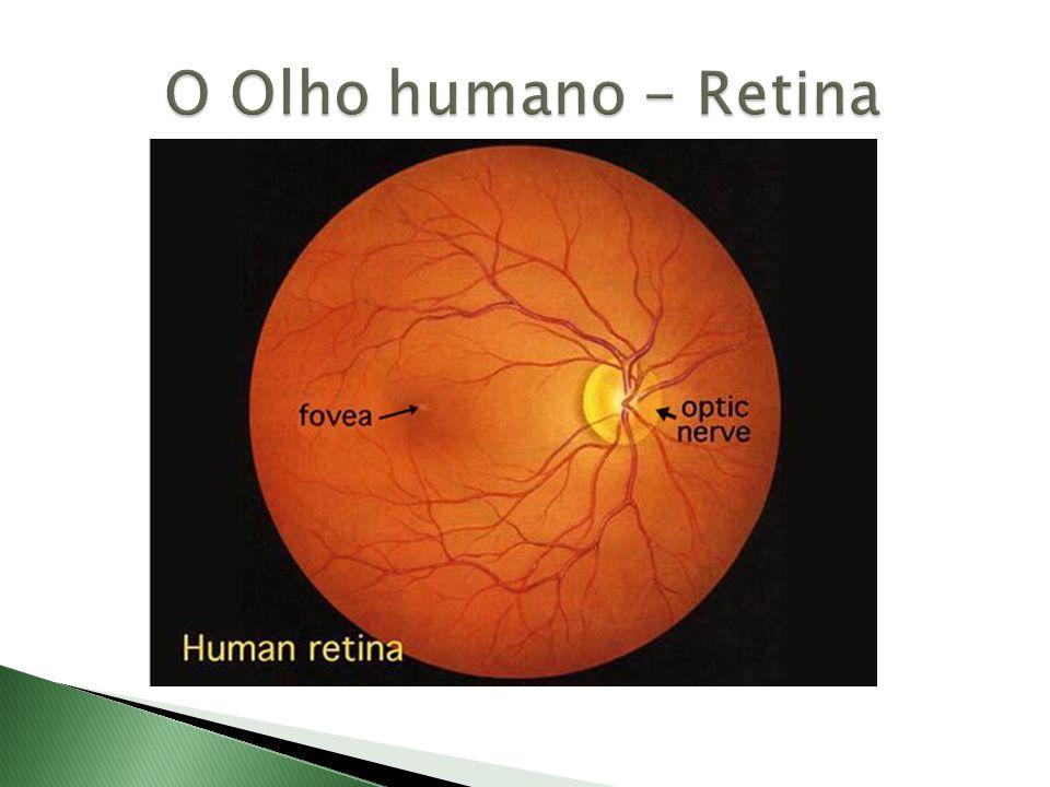 O Olho humano - Retina