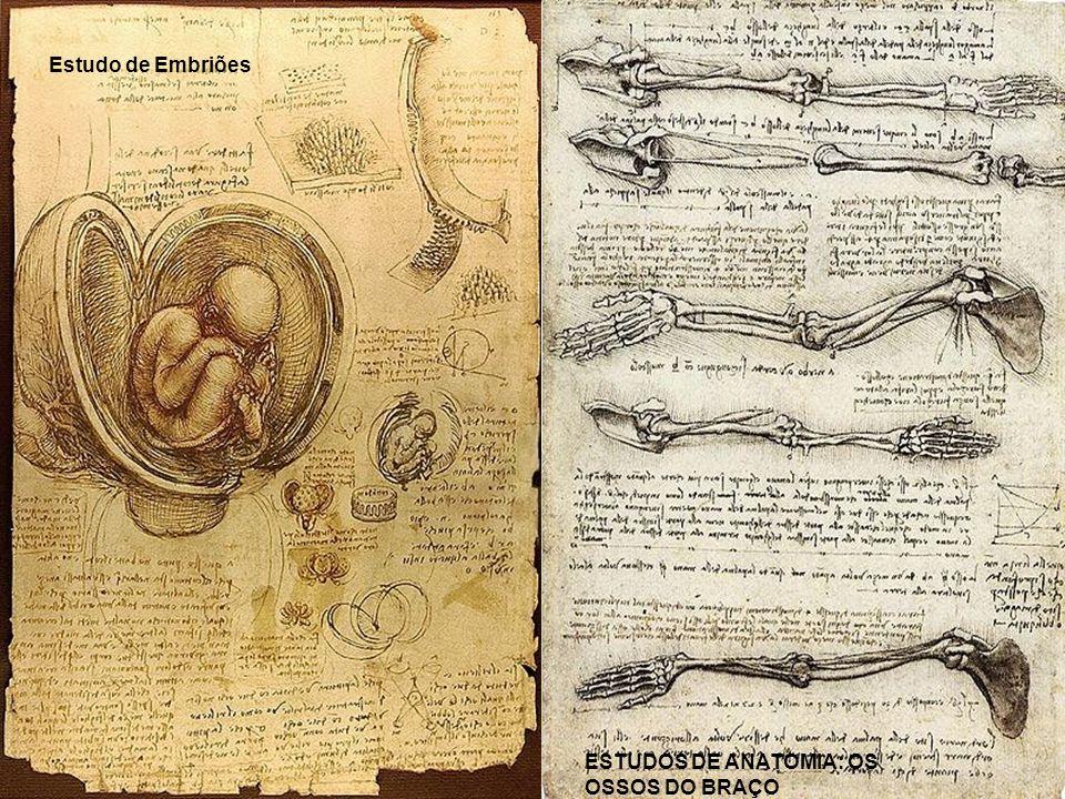 Estudo de Embriões ESTUDOS DE ANATOMIA: OS OSSOS DO BRAÇO