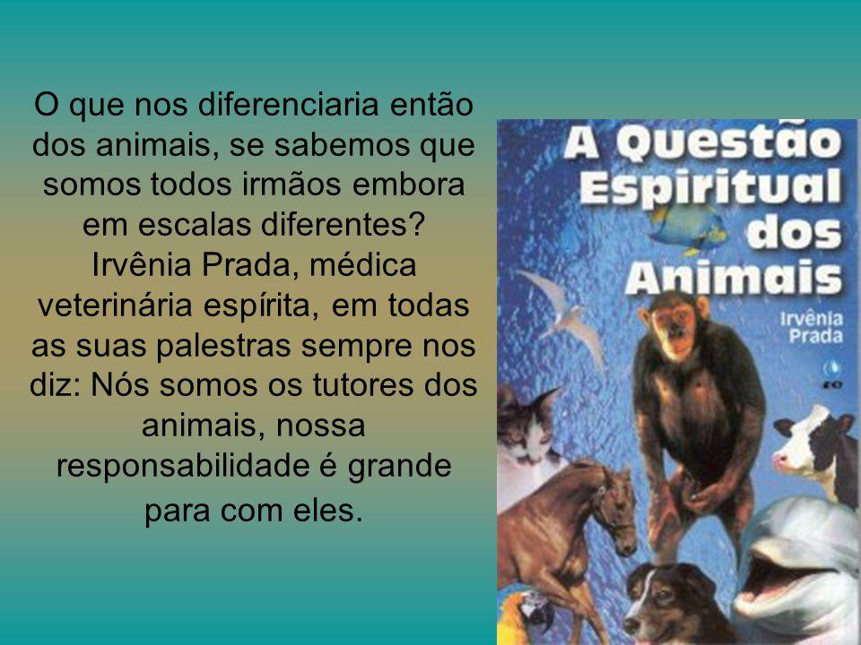 O que nos diferenciaria então dos animais, se sabemos que somos todos irmãos embora em escalas diferentes.
