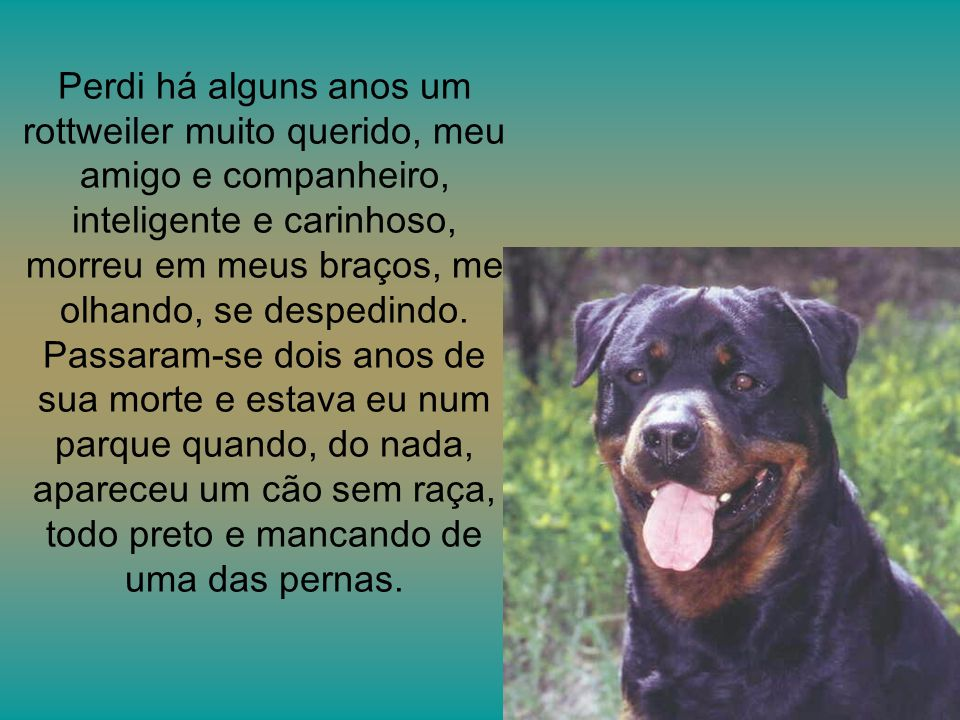 Perdi há alguns anos um rottweiler muito querido, meu amigo e companheiro, inteligente e carinhoso, morreu em meus braços, me olhando, se despedindo.