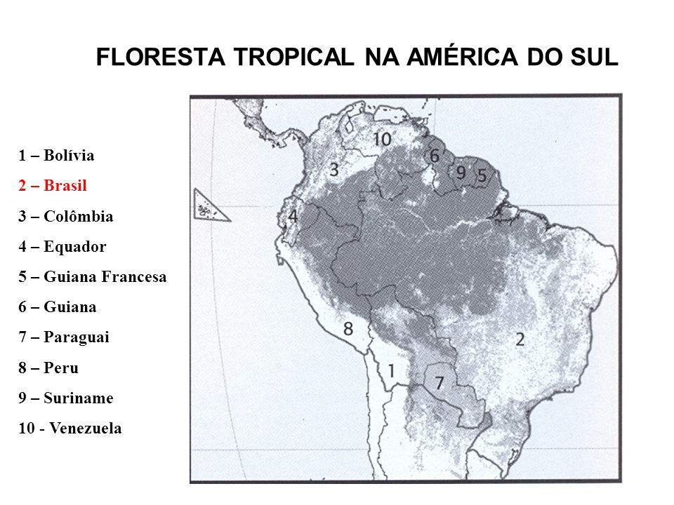 FLORESTA TROPICAL NA AMÉRICA DO SUL