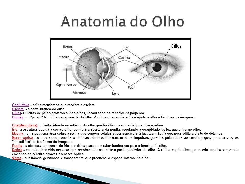 Anatomia do Olho Cílios