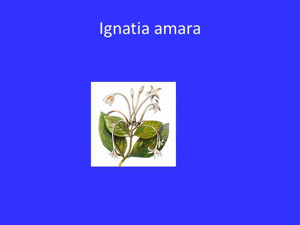 Ignatia amara