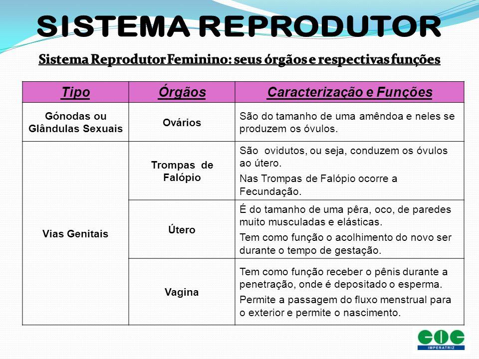 Sistema Reprodutor Feminino: seus órgãos e respectivas funções Tipo