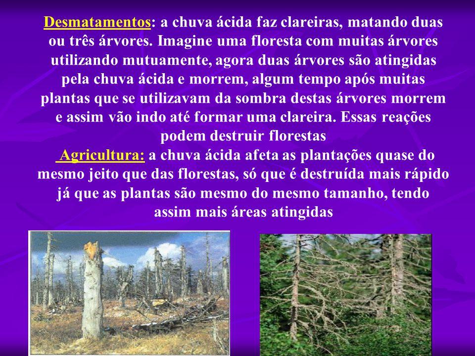Desmatamentos: a chuva ácida faz clareiras, matando duas ou três árvores.