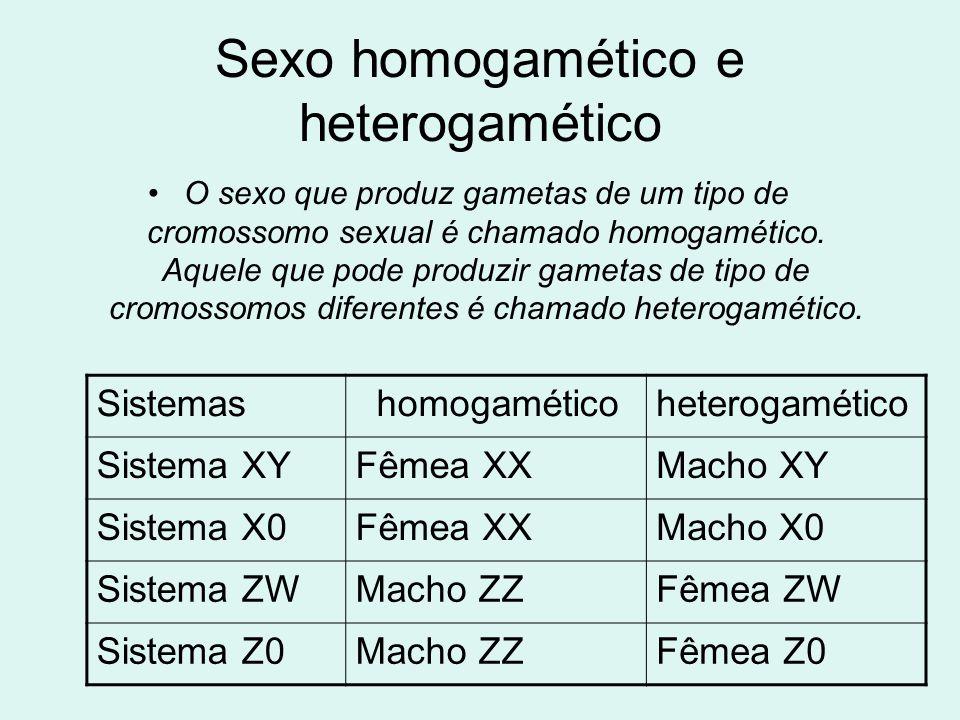 Sexo homogamético e heterogamético