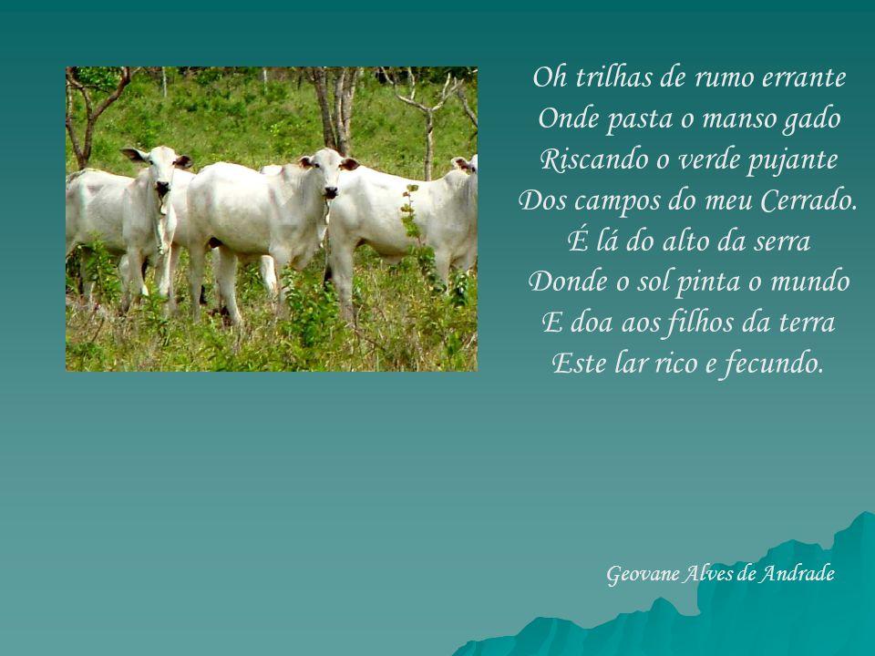Oh trilhas de rumo errante Onde pasta o manso gado