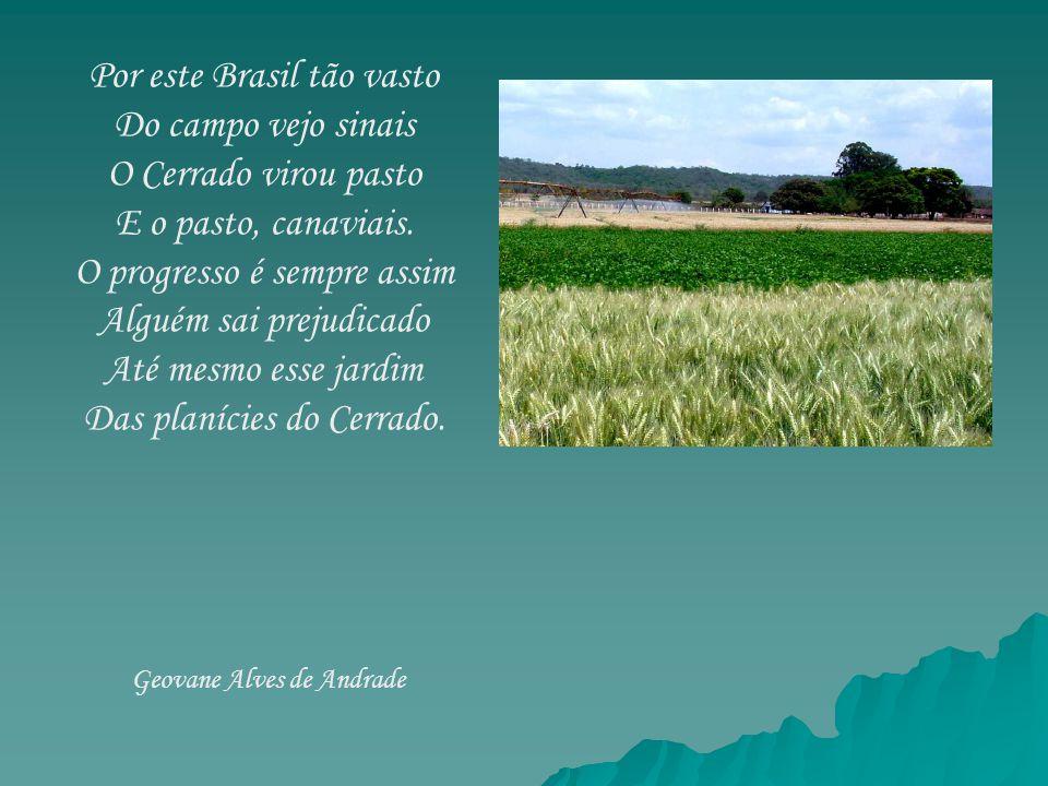 Por este Brasil tão vasto Do campo vejo sinais O Cerrado virou pasto