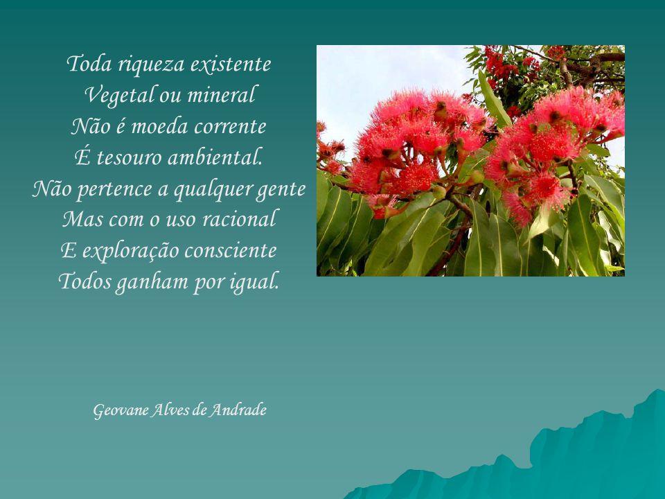 Toda riqueza existente Vegetal ou mineral Não é moeda corrente
