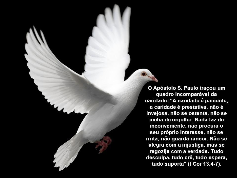 O Apóstolo S.