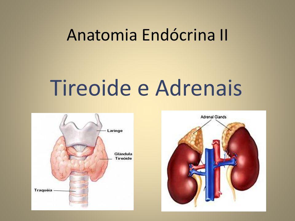 Anatomia Endócrina II Tireoide e Adrenais