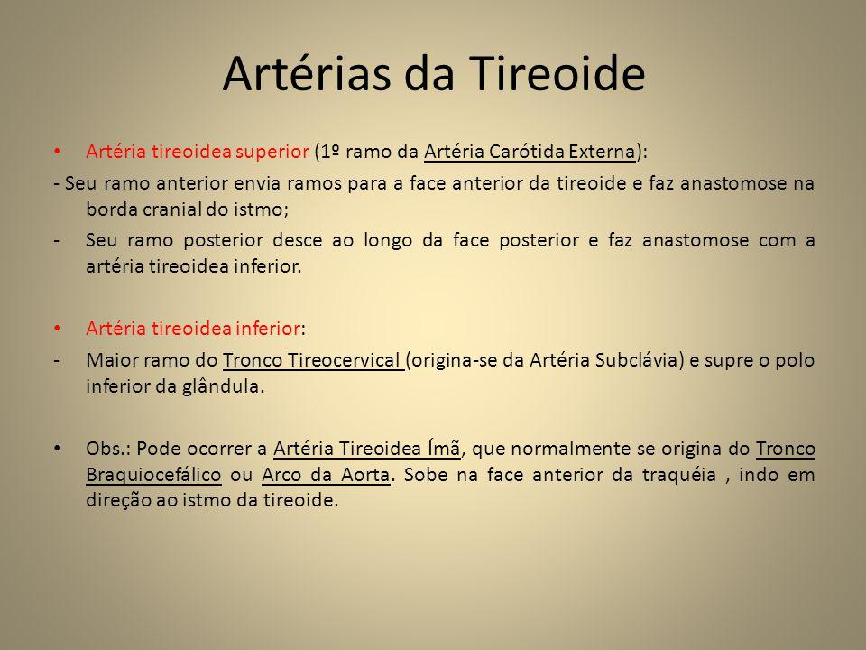Artérias da Tireoide Artéria tireoidea superior (1º ramo da Artéria Carótida Externa):