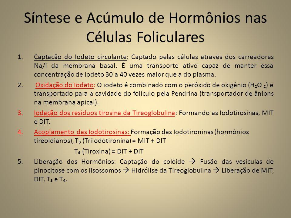 Síntese e Acúmulo de Hormônios nas Células Foliculares