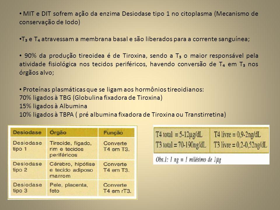 MIT e DIT sofrem ação da enzima Desiodase tipo 1 no citoplasma (Mecanismo de conservação de Iodo)